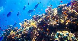 Reef+underwater_df6cc846-20cf-4bf5-a1b3-5f2cb689bb96-prv
