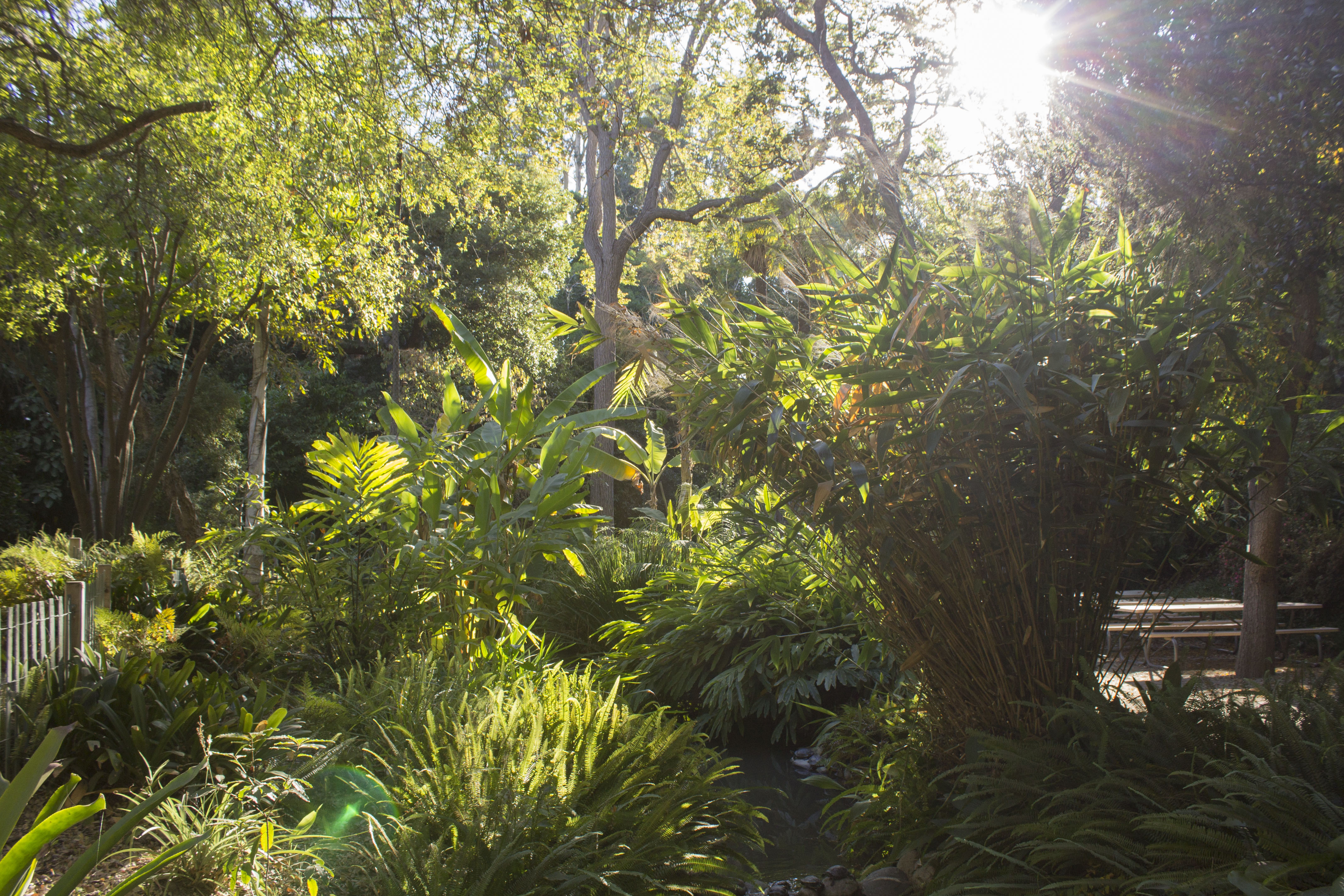 Open to the public, the Mildred E. Mathias Botanical Garden is a botanical wonder hidden in plain sight on the UCLA campus.